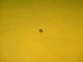 kulička 5 mm do řízení a spojky